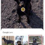 google lens Tiererkennung